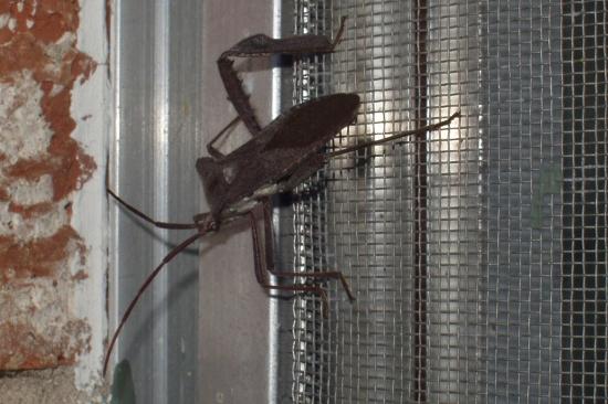 Cửa Lưới Chống Muỗi, Côn Trùng